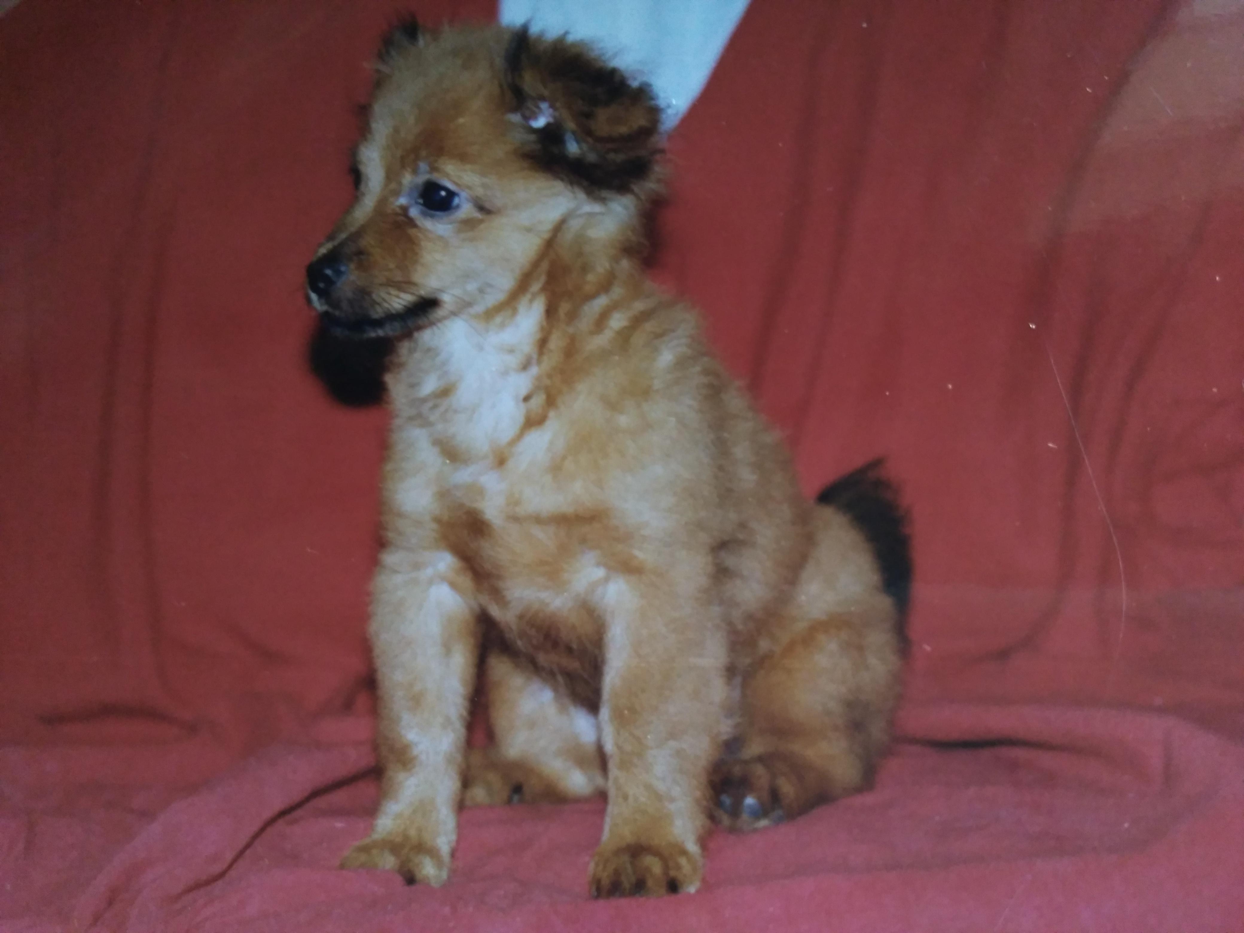 perrito chulo